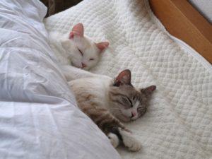 睡眠の質を上げましょう😴